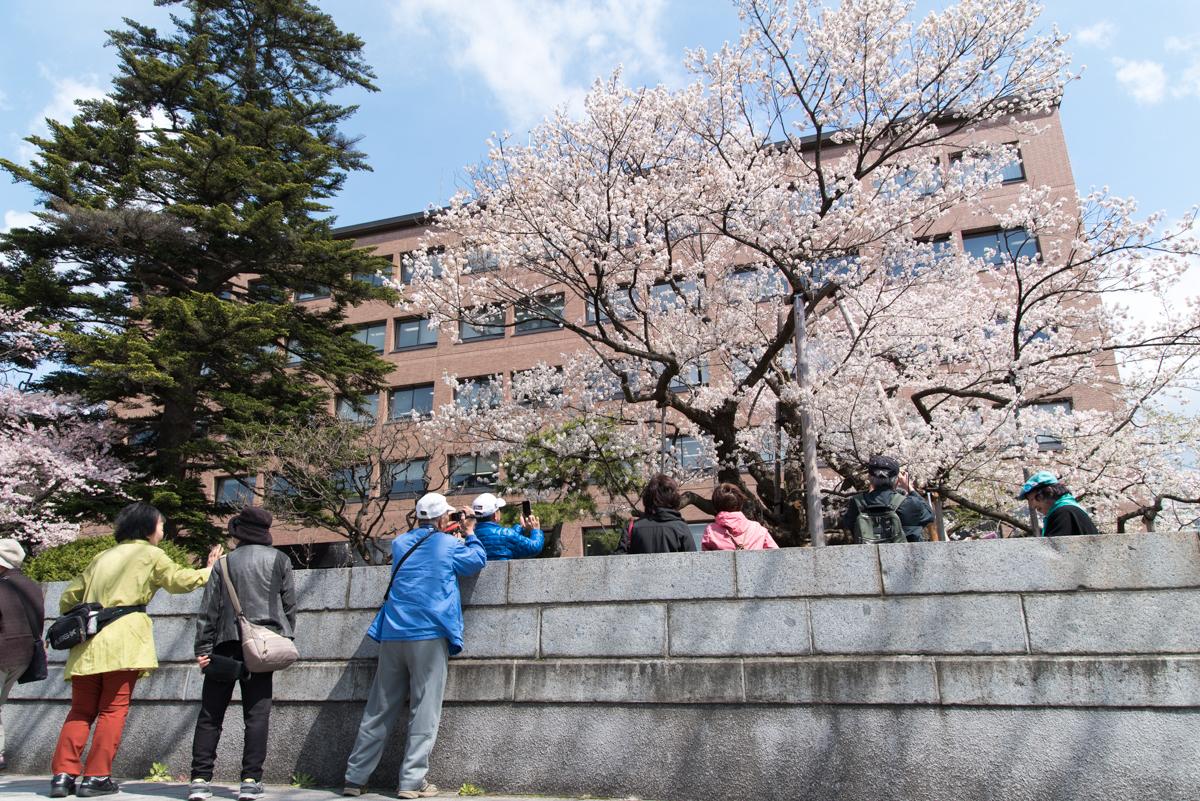 石割桜-03