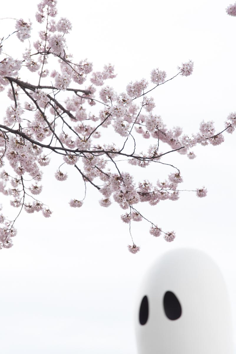 官庁街通りの桜-06