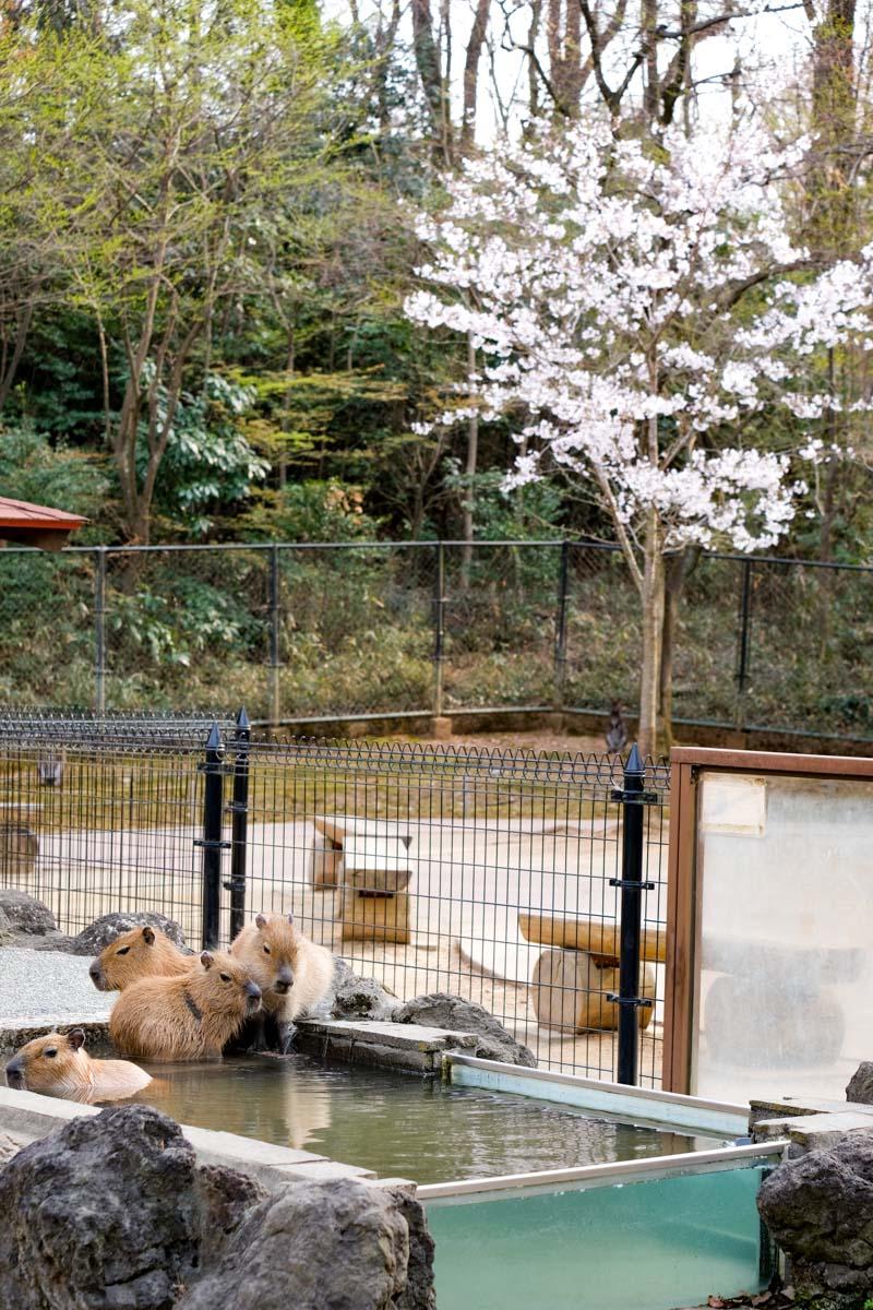 埼玉県こども動物自然公園-01