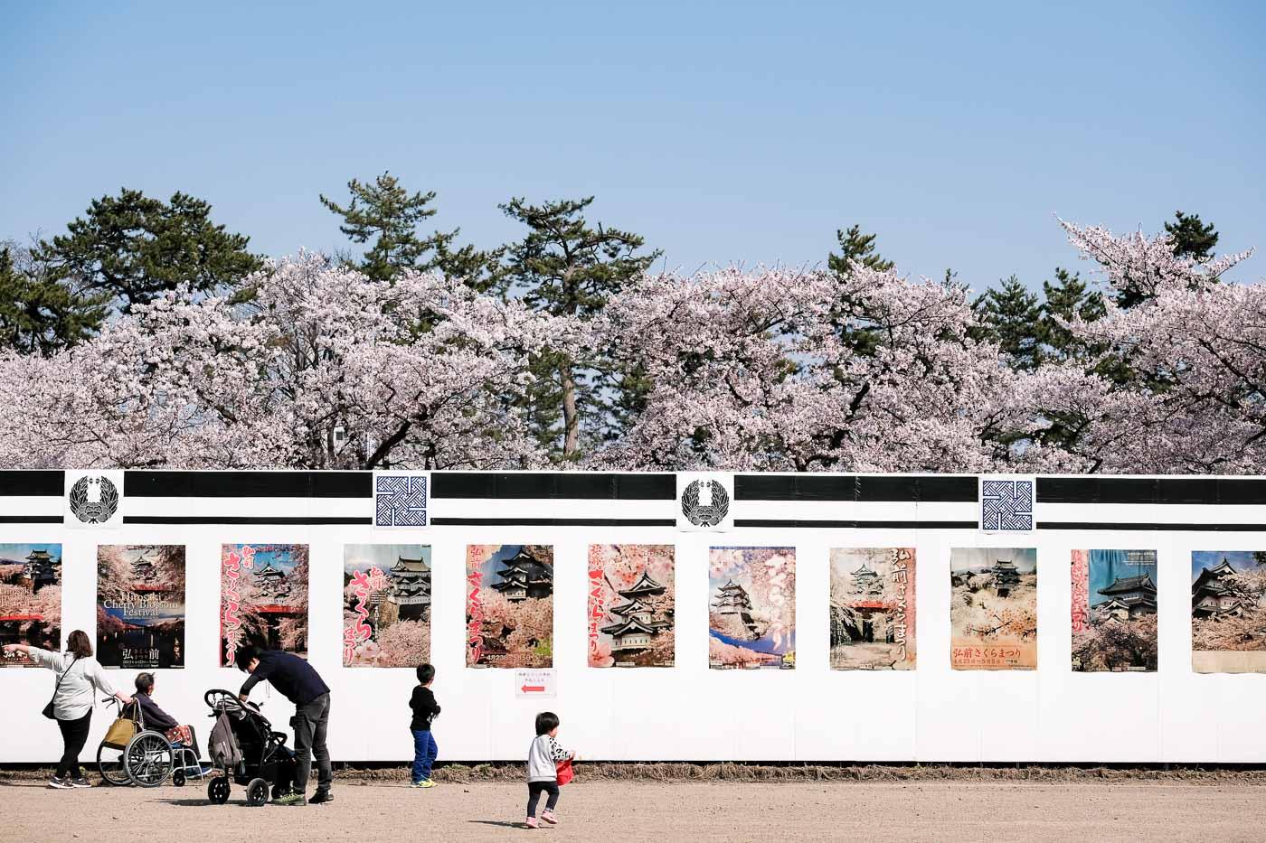 2019弘前の桜-08