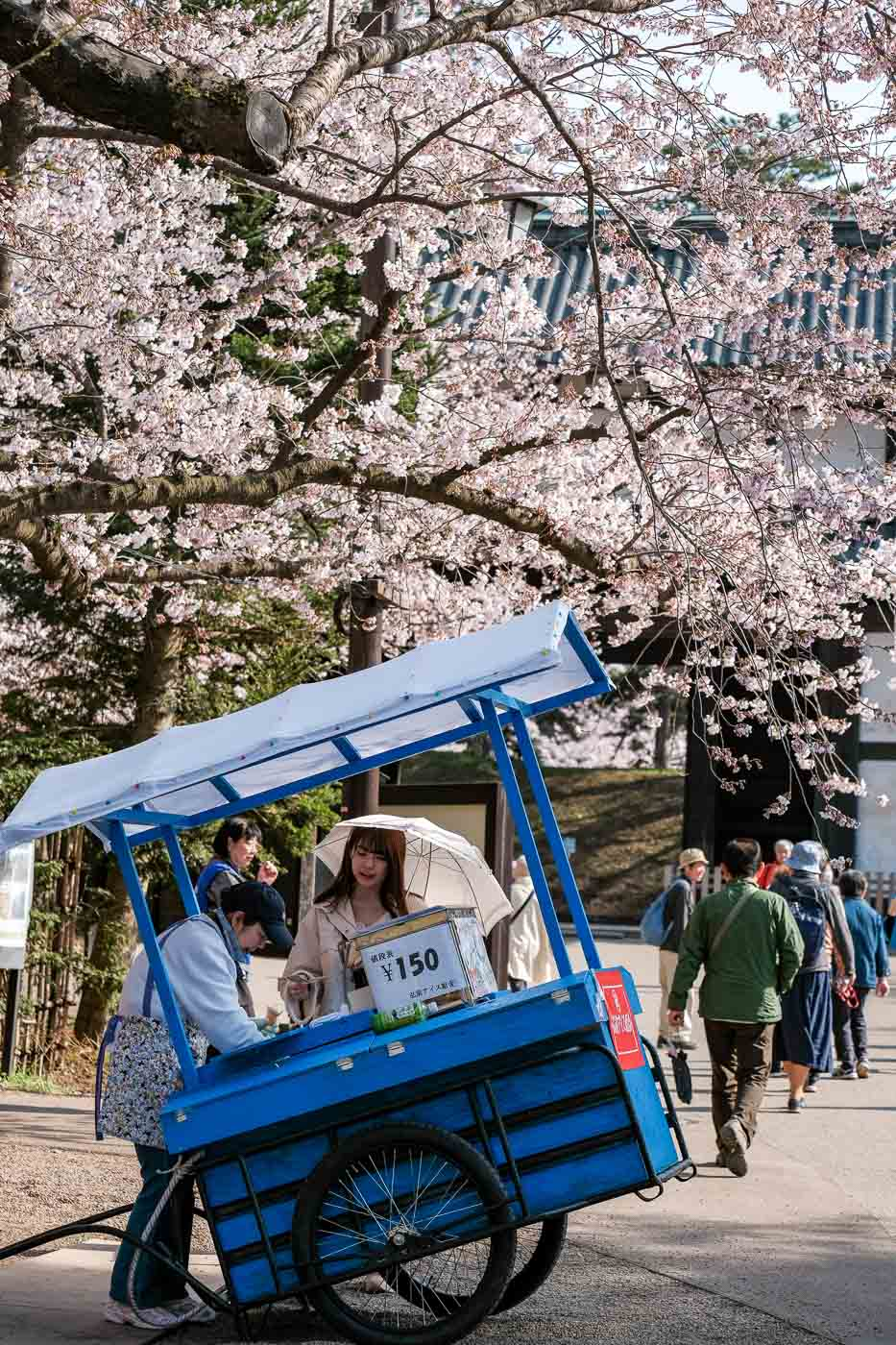 2019弘前の桜-11