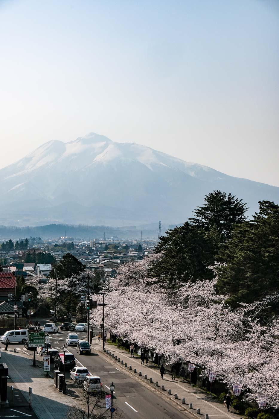 2019弘前の桜-18