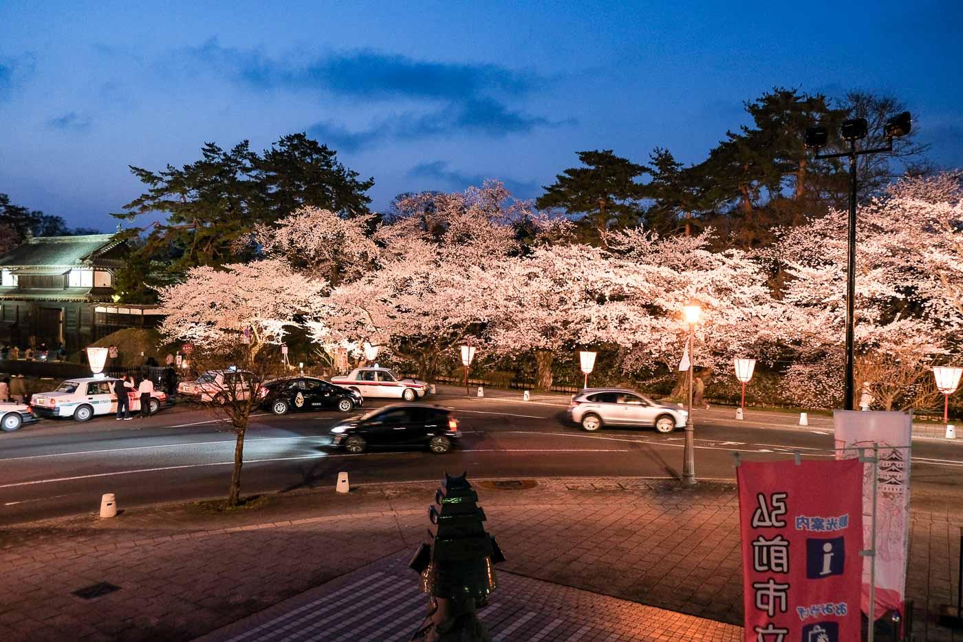 2019弘前の桜-19