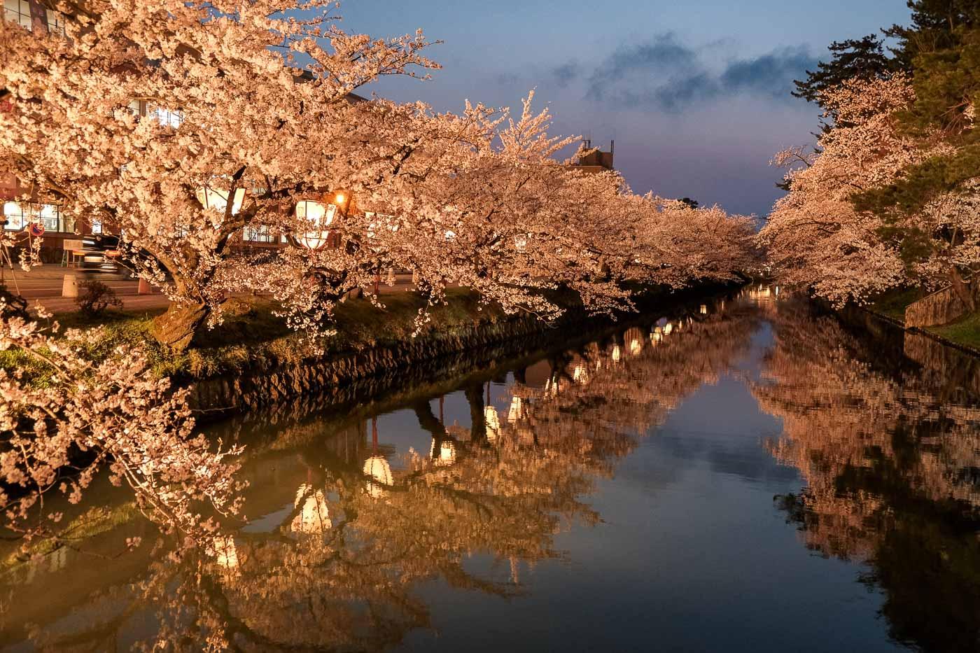 2019弘前の桜-20