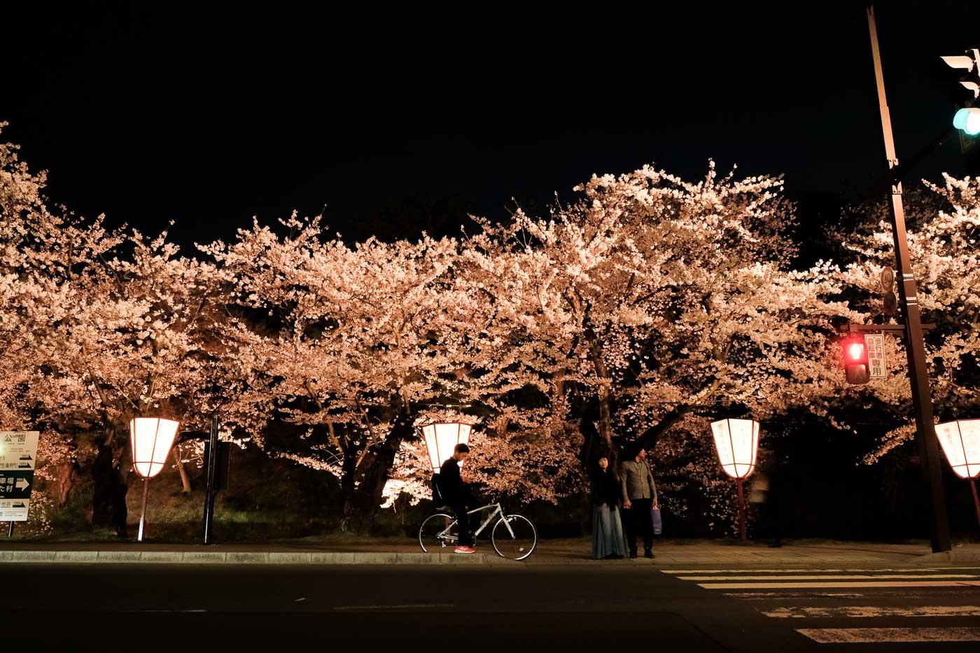 2019弘前の桜-22