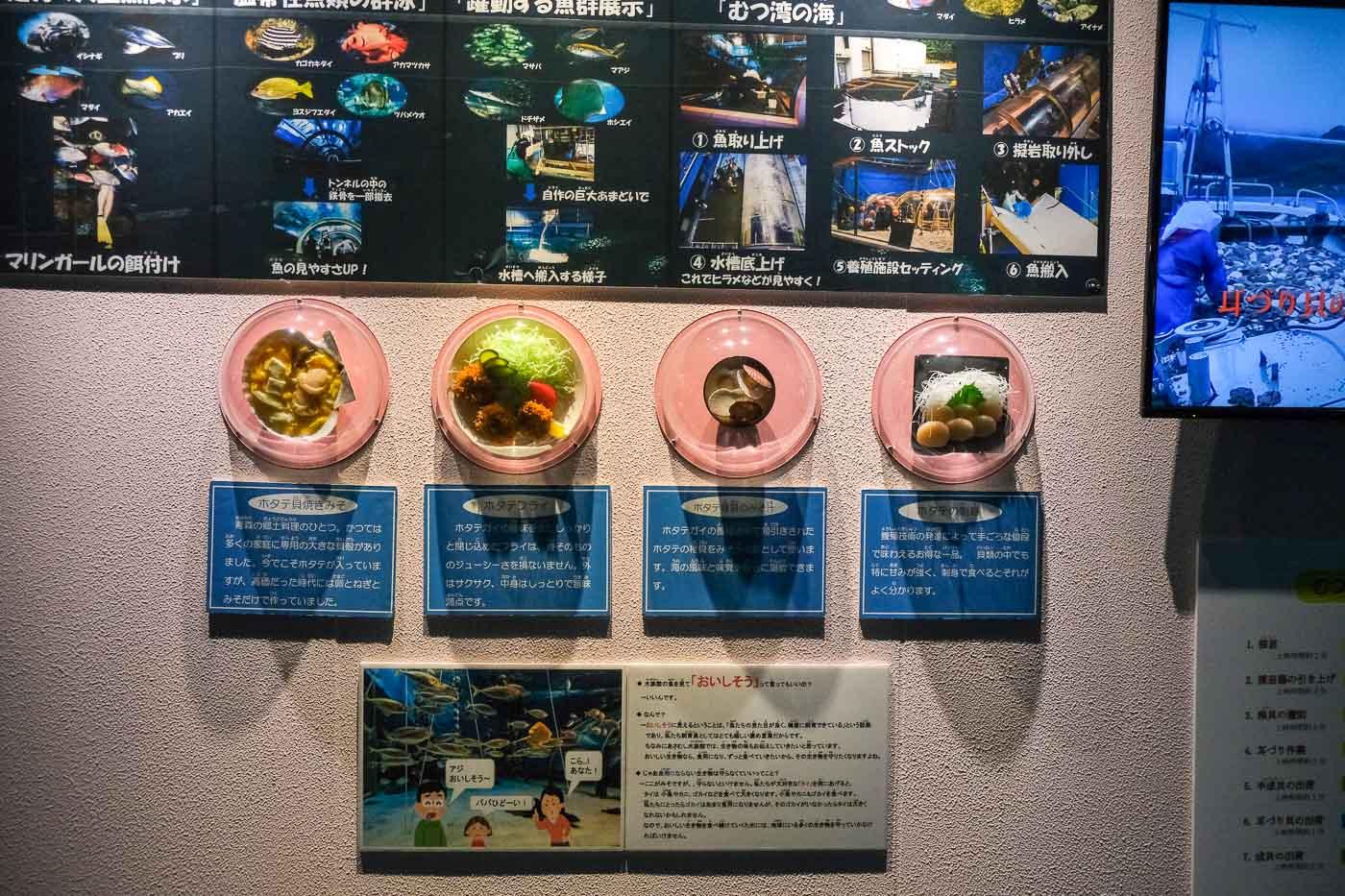 浅虫水族館-09