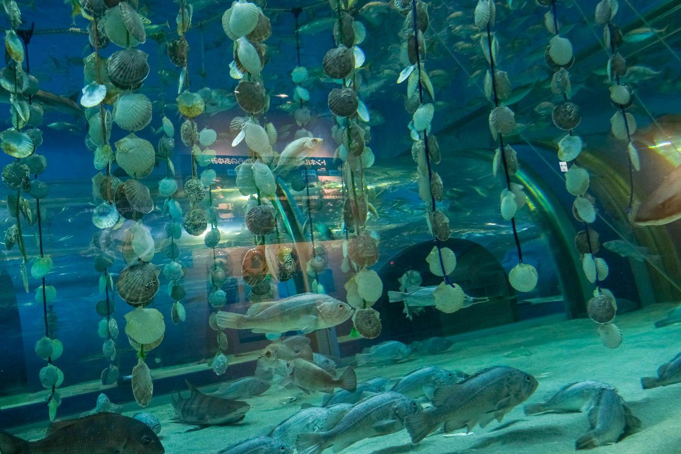 浅虫水族館-06