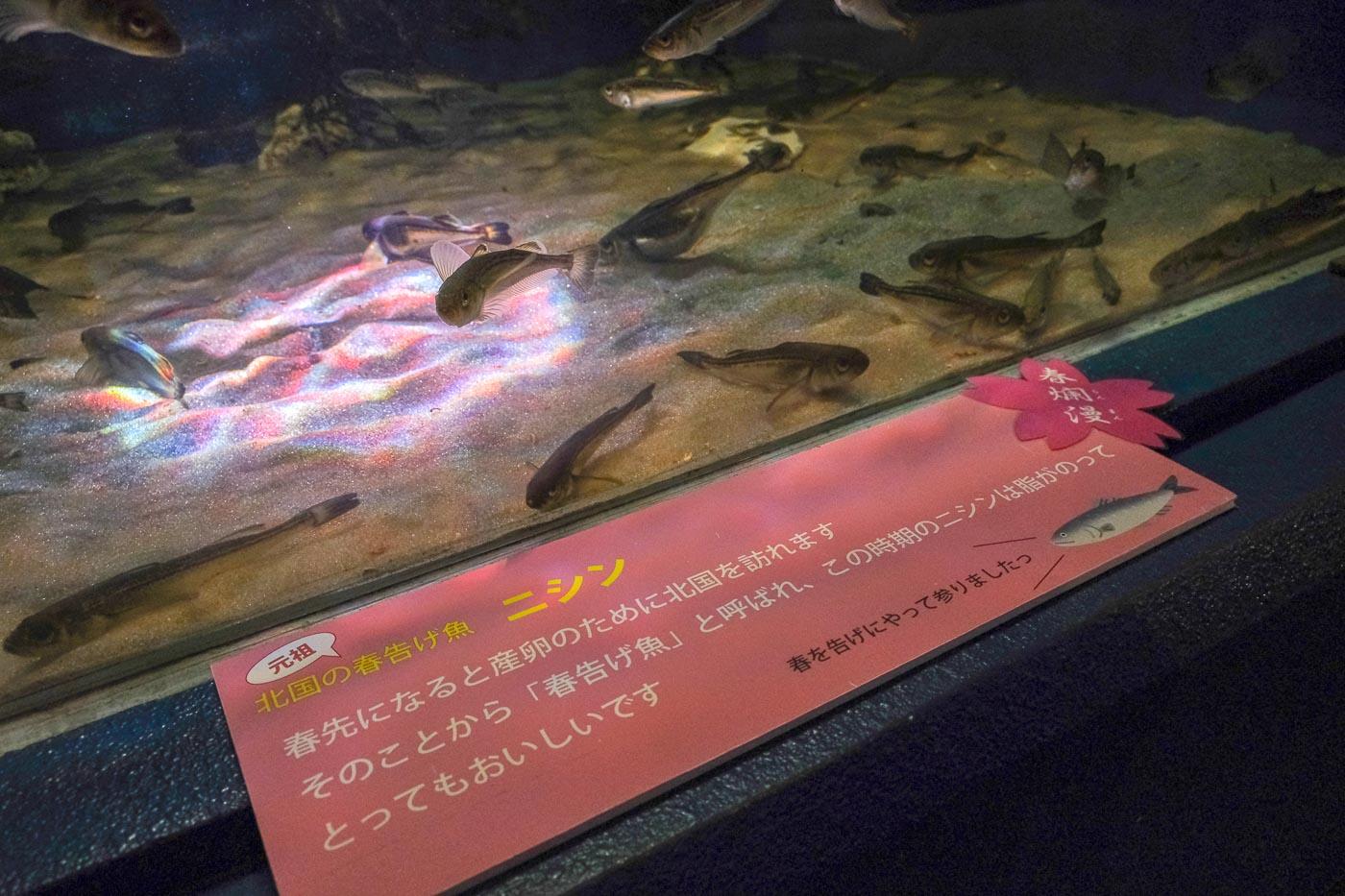浅虫水族館-13