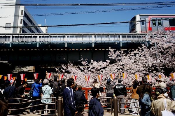 中目黒の桜-01.jpg