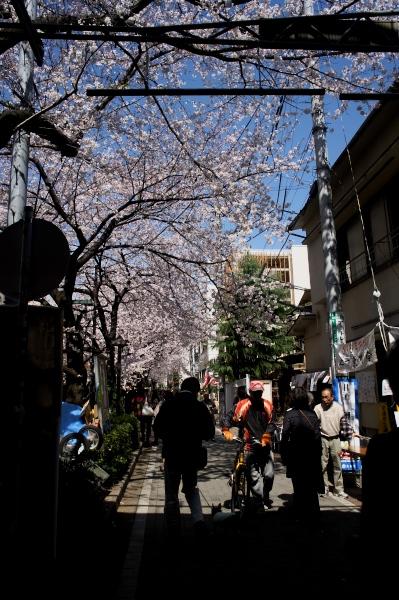 中目黒の桜-03.jpg