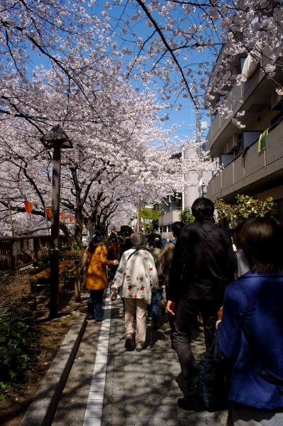 中目黒の桜-06.jpg
