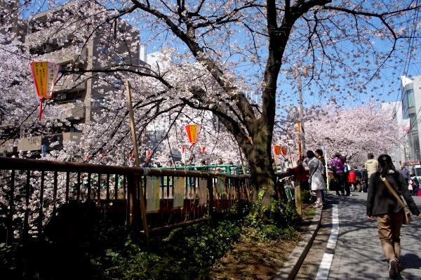 中目黒の桜-07.jpg