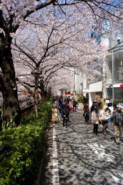 中目黒の桜-09.jpg