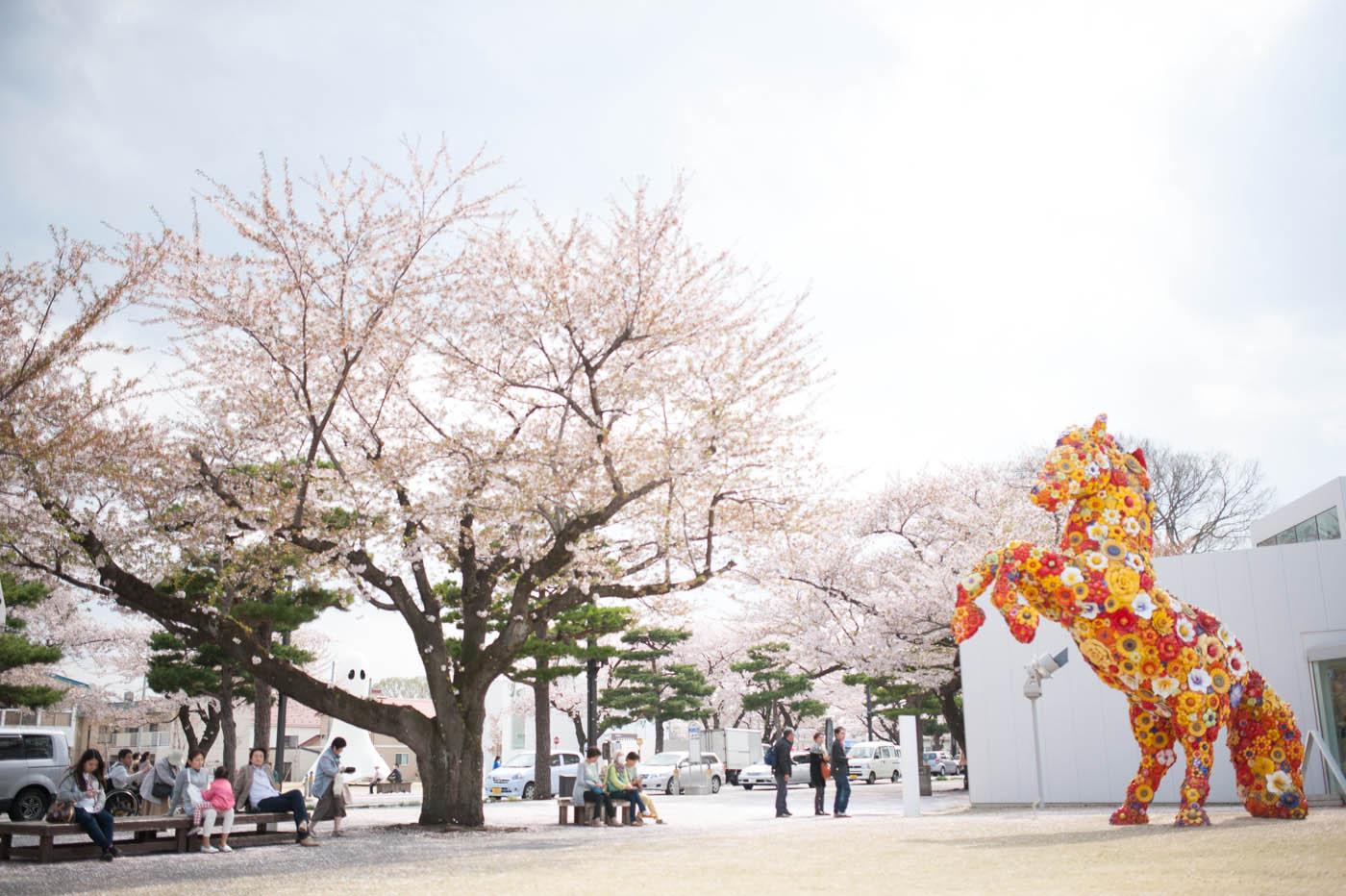 官庁街通りの桜絨毯-06